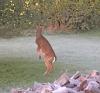Norwood-deer-eating.png