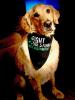 Norwood-dog-bandana.png