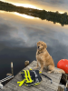 Norwood-dog-sunset.png