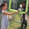 Oburg-Farmers-Market-alpaca-feeding.png