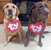 Ogdensburg-beanie-dogs.png