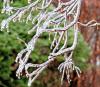 Ogdensburg-ice.png