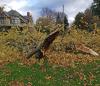 Ogdensburg-tree-down.png