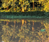 Oswegatchie-reflection.png