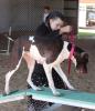 Parishville-girl-at-fair-dog-show.png