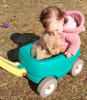Parishville-kid-puppy.png
