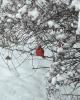 Pierrepont-Cardinal.png