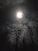 Pierrepont-Moon-Branch.png