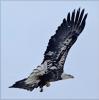 Pierrepont-bird.png