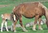 Pony-Richville.png
