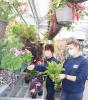 Potsdam-Agway-flowers.png
