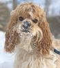 Potsdam-dog-snow.png