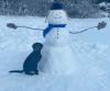 Potsdam-dog-snowman.png