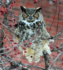 Potsdam-owl.png