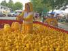 Potsdam-rubber-duck.png