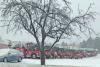 Potsdam-storm-trucks.png
