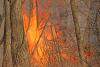 Potsdam-trail-fire.png