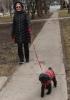 Potsdam-woman,-little-dog.png