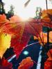 Rensselaer-Falls-leaf.png