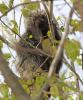 Rensselaer-Falls-porcupine.png