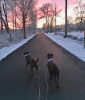 Rensselaer-Falls-snow-dogs.png