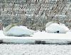 Rensselaer-falls-swan.png