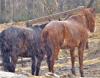 Richville horses.png