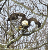 Richville-Eagle.png