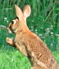 Richville-Happy-Bunny.png