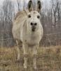 Richville-donkey.png