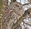 Richville-owl.png