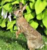 Richville-rabbit.png