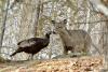 Russell-Turkey-Deer.png
