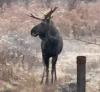 Santa-Clara-moose.png