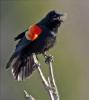 Scenic Brasher-Falls-blackbird.png