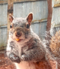 Scenic Canton-Squirrel.png