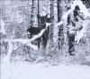 Snow-deer-Canton.png
