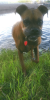 South-Colton-dog-swim.png