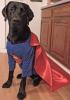 Super-dog-Madrid.png