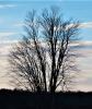 Tree-Richville.png