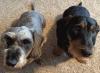 Waddingon-dog-trackers.png