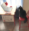 Waddington-Cat-working.png