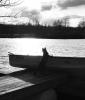 Waddington-cat.png