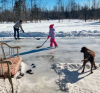 Waddington-ice-family.png