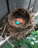 Waddington-robin's-nest.png