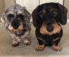 Waddington-tracking-dogs.png