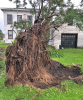 Waddington-uprooted.png