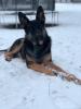 Winter-shepherd.png