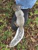 baby-squirrel-Canton.png