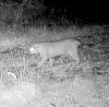 bobcat-photo-norfolk.png